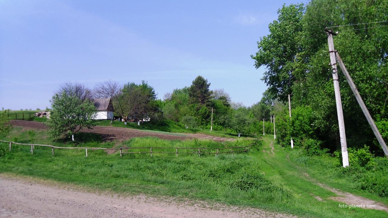 Лузанівка,дорога до лісу