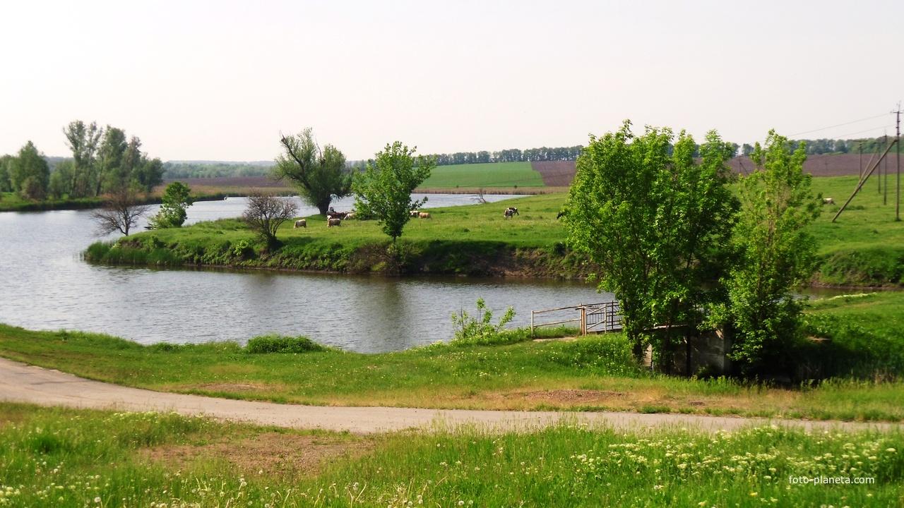Лузанівка, ставок і левада