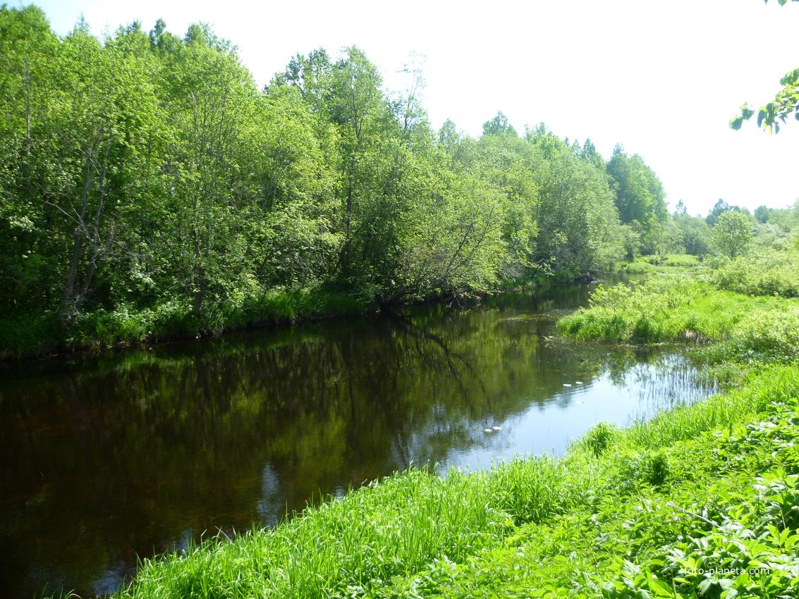 Речка Жукопа в деревне Горка