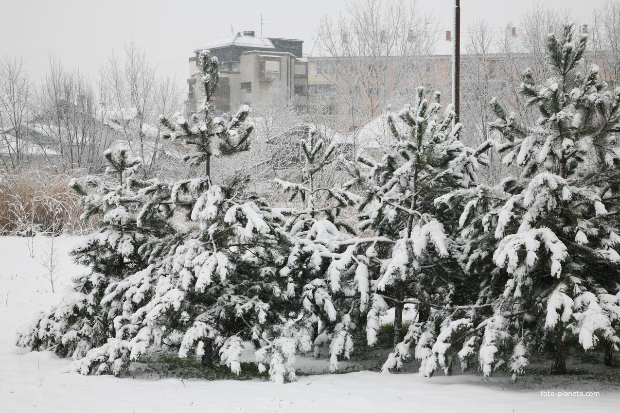 Зима в Кикинде.
