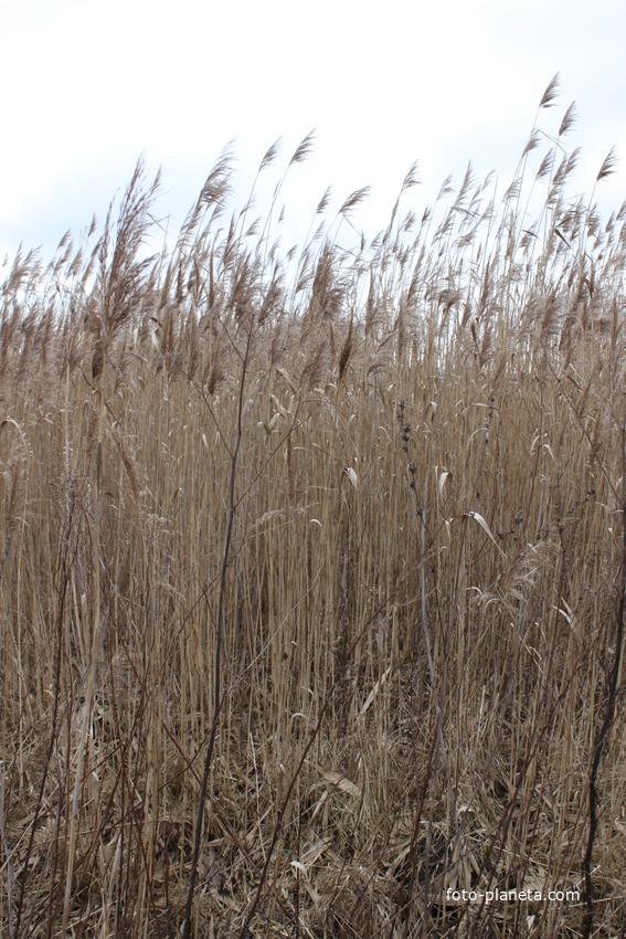 Пушкарное. Травы на берегах Везёлки.