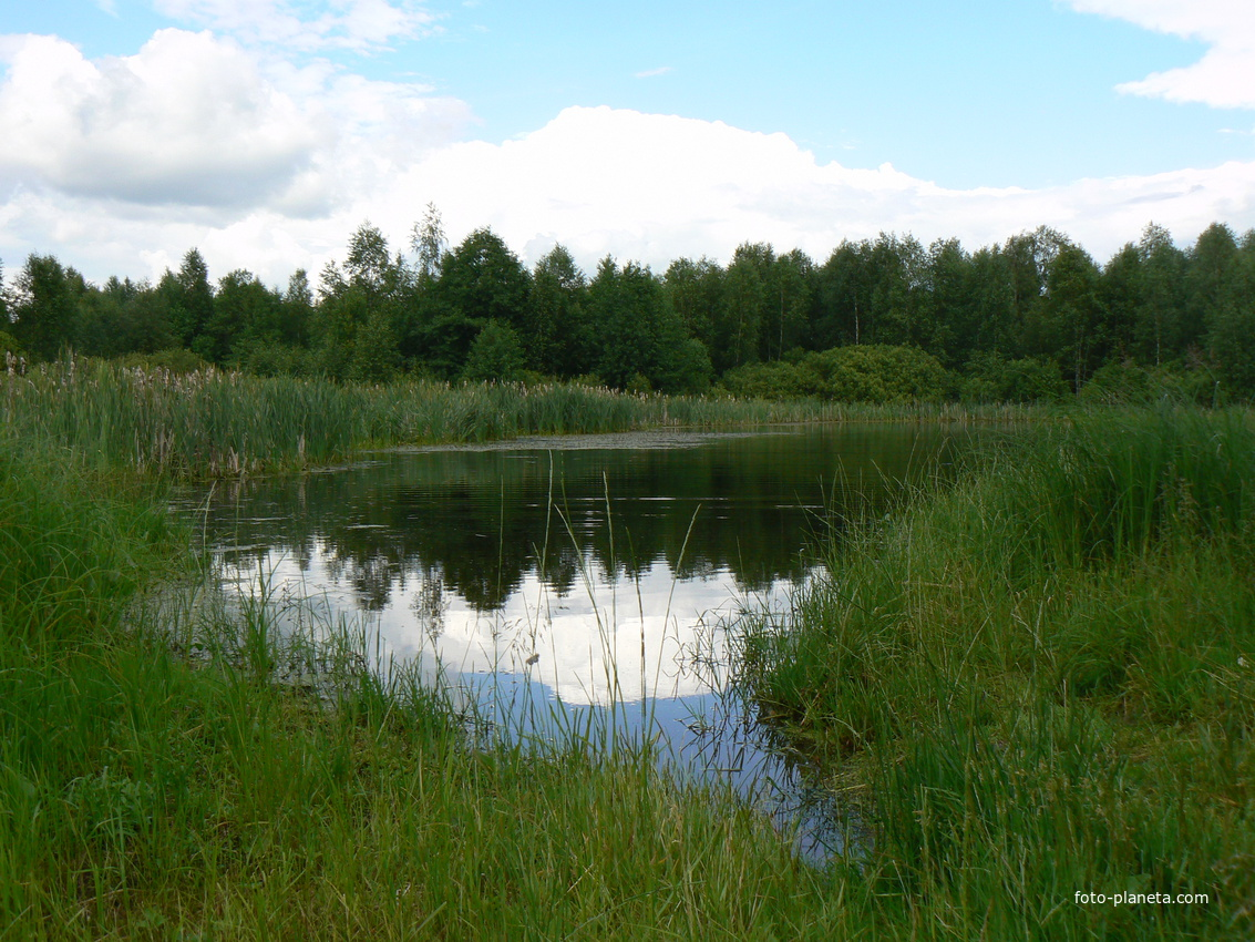 рыбалка в гороховецком районе