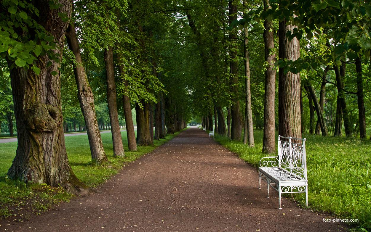 Открытки пушкино парк приходится