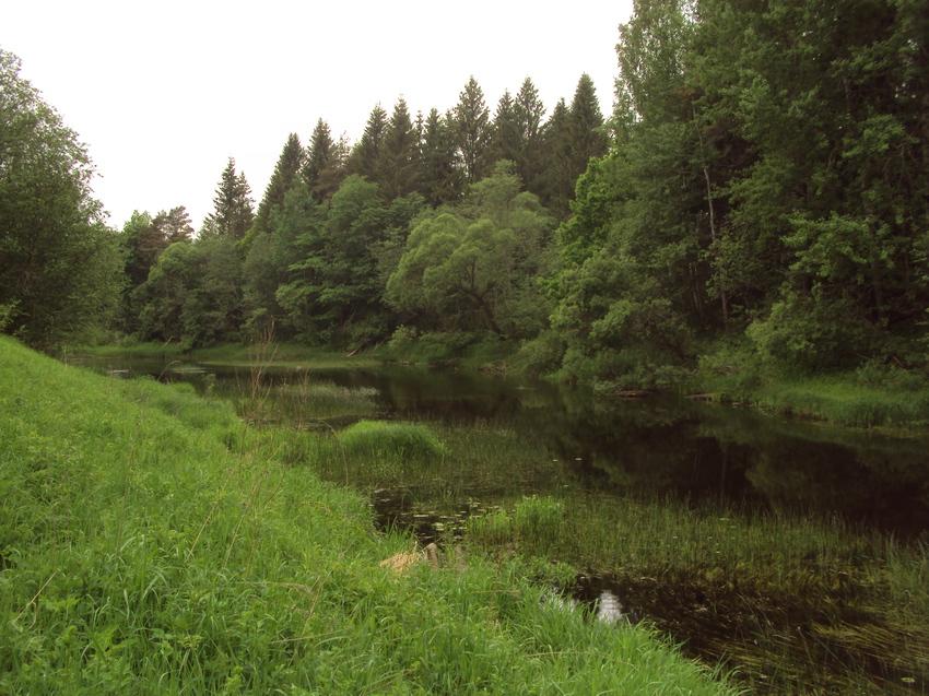 деревня Крутой ручей, река Ельша