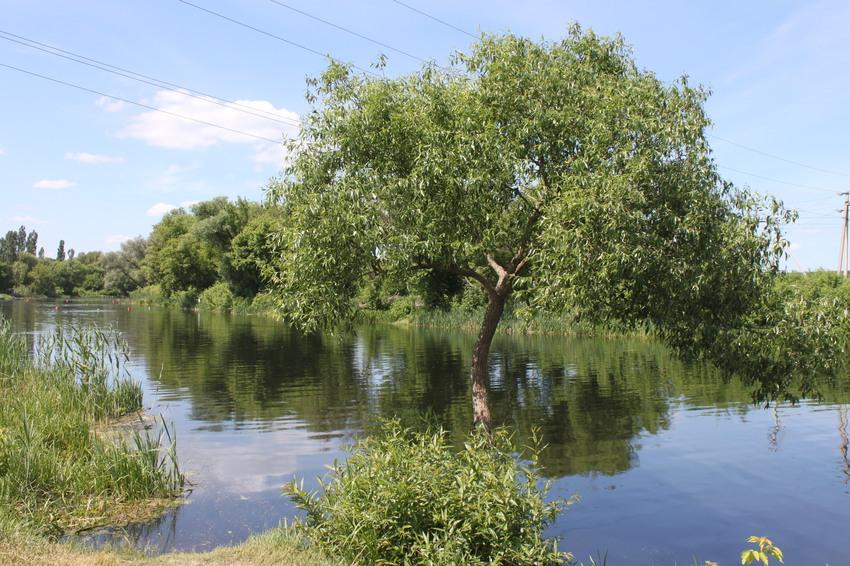 нехотеевка шебекинский район рыбалка