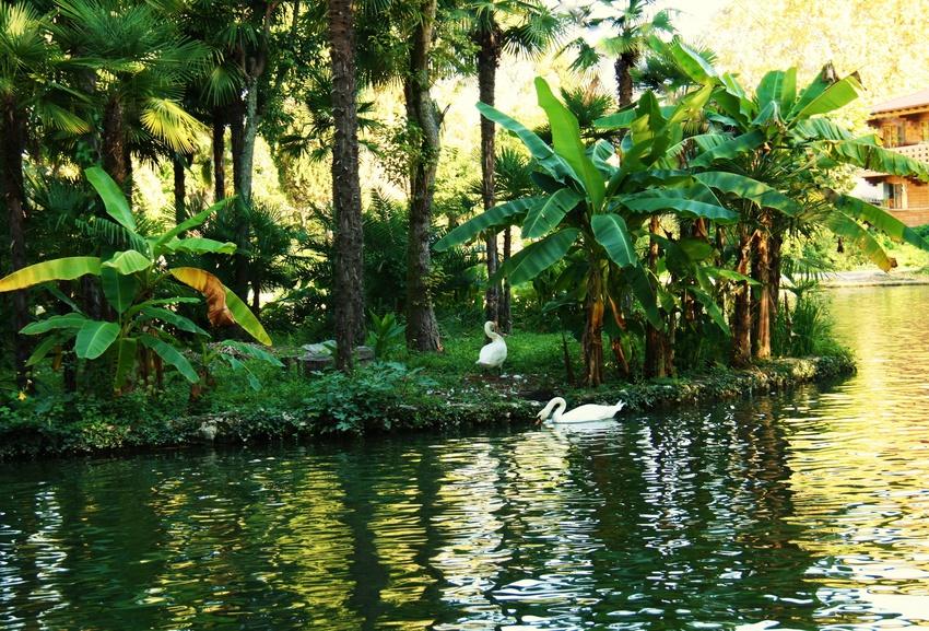 новый афон. абхазия. лебединое озеро в парке.