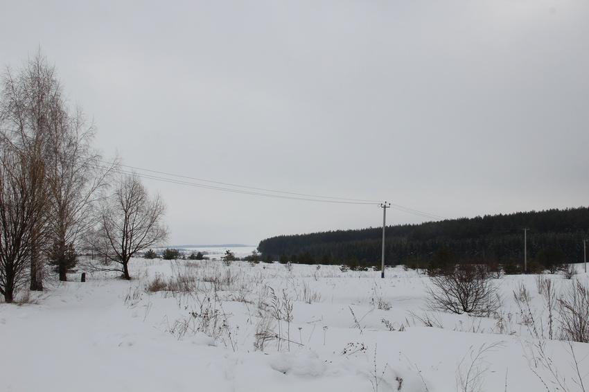 д. Филипповичи, Зарайский район. Февраль, 2016. Вид на шоссе и сосновый бор из деревни