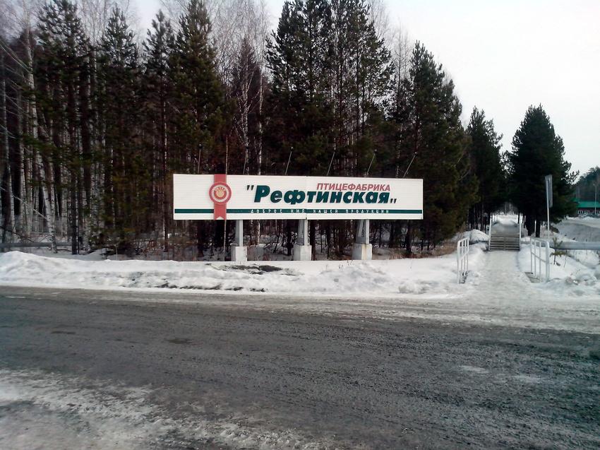 Рефтинская птицефабрика. 2016 г