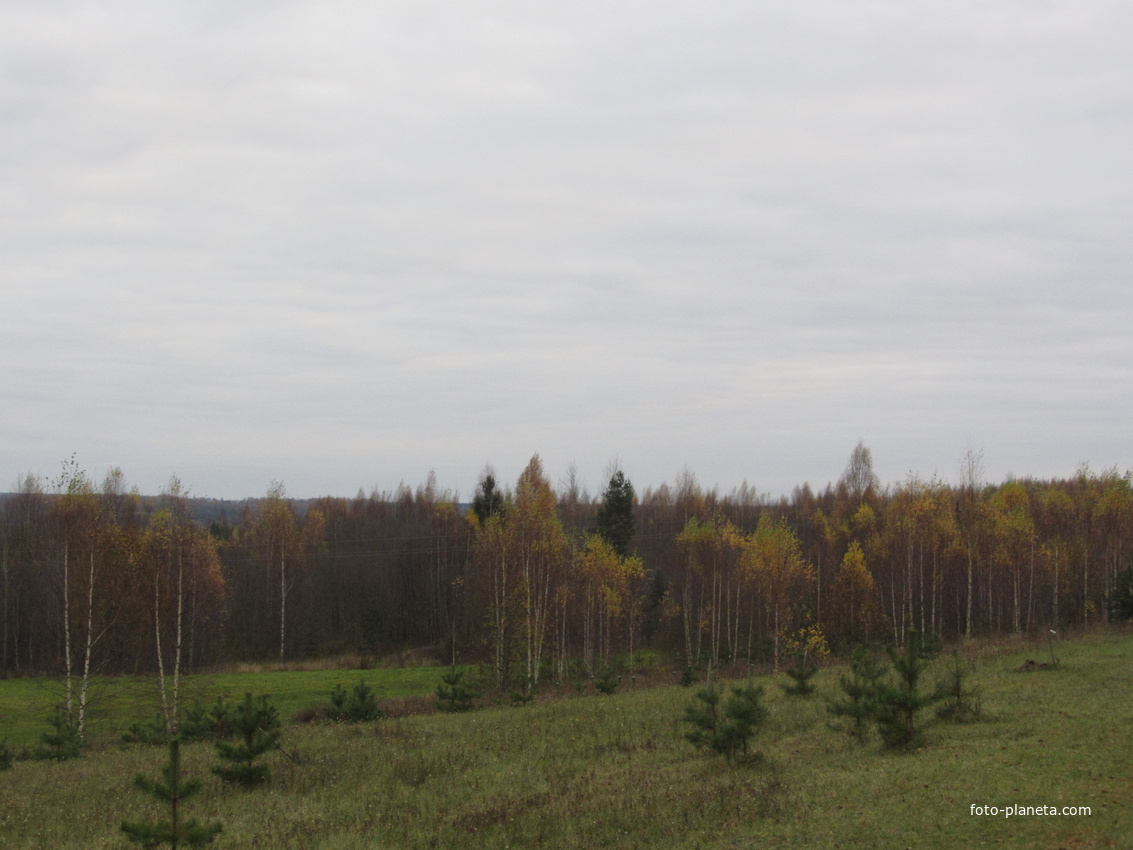 БАЗА ОТДЫХА ЛЮБЫТИНО-ХУТОР | Любытинский район