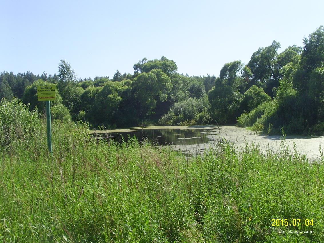 Деревенский пруд в Тупицыно