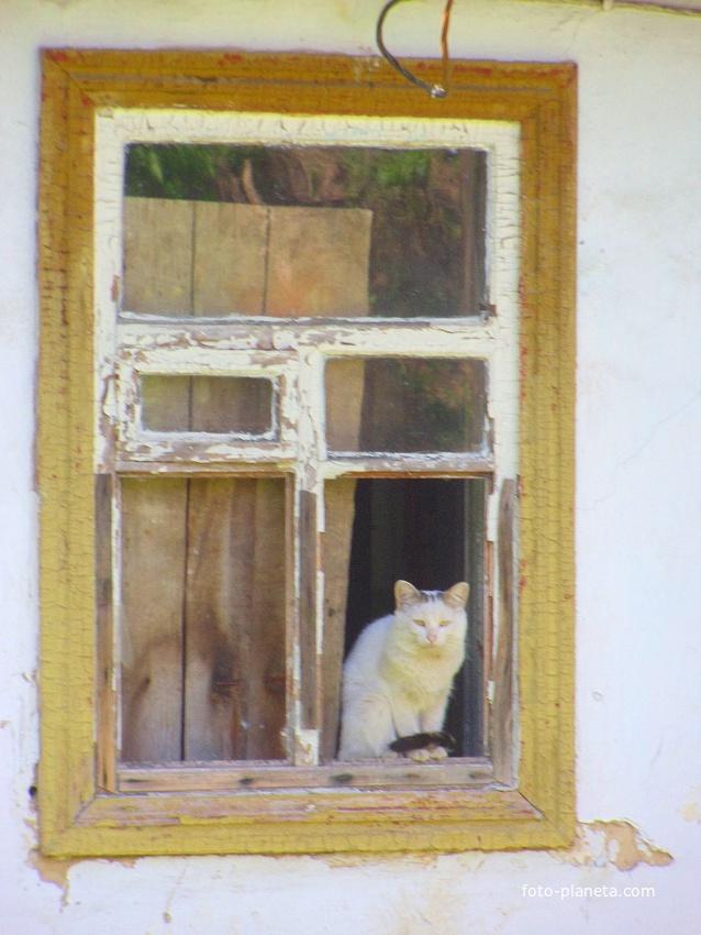 Сунковский кот.