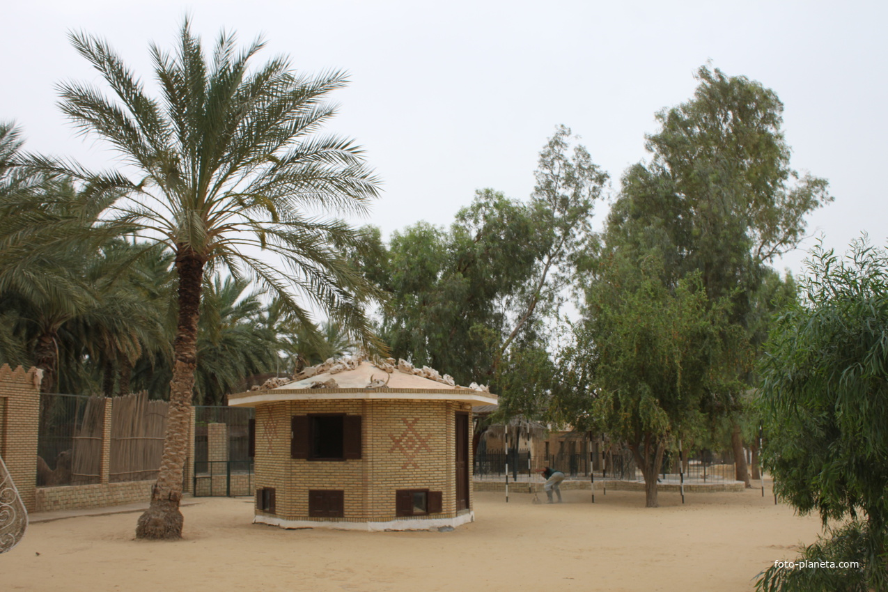 Таузар. Зоопарк. | Тунис