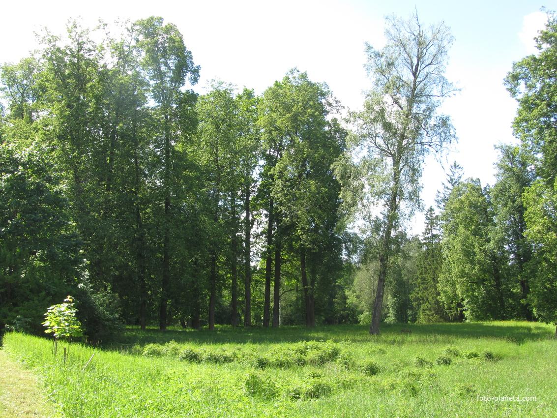 Шапки, усадебный парк