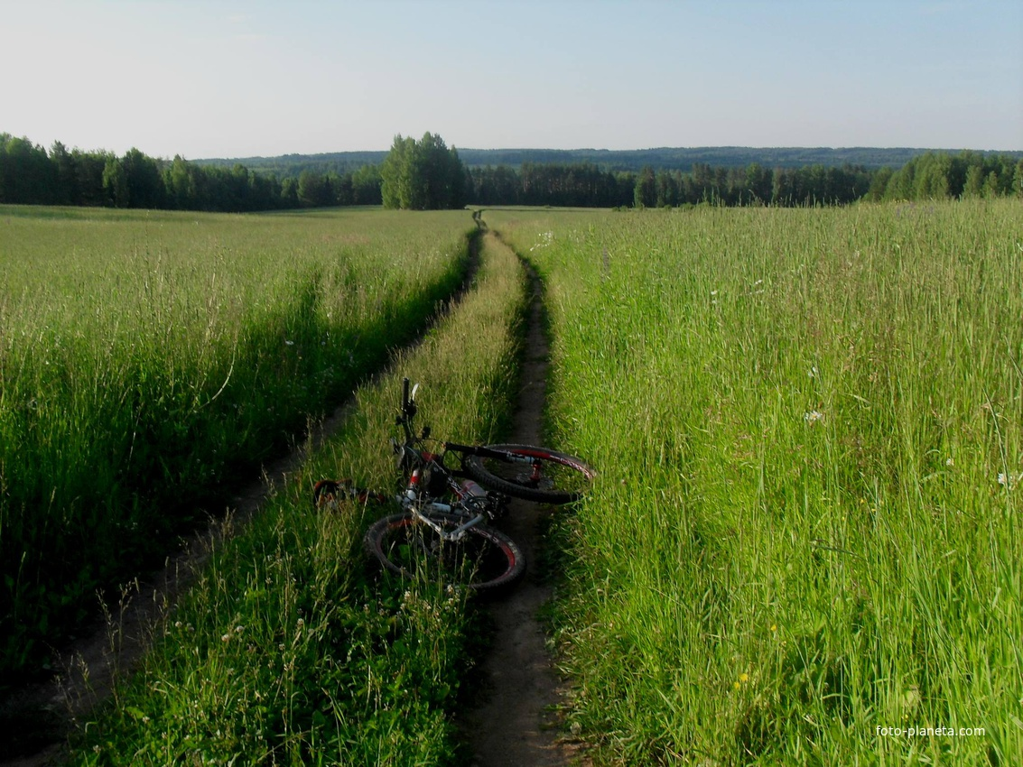свою фото поселок бечева даровской район россии него основная