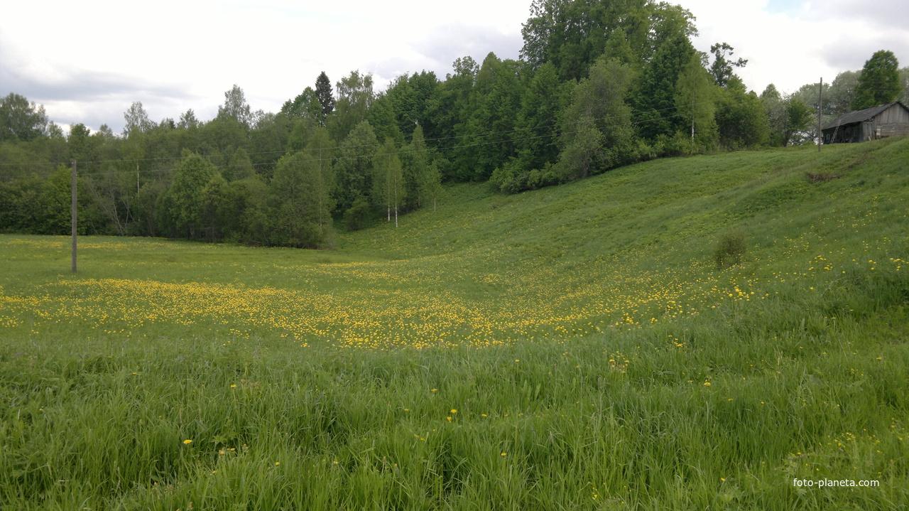 Весна пришла. | Щипцово (Пошехонский район)