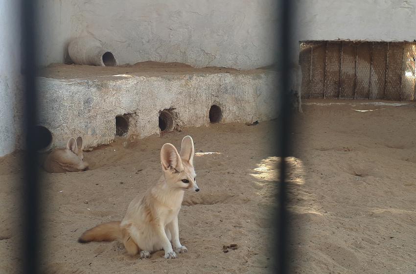 Зоопарк   Таузар (Тунис)