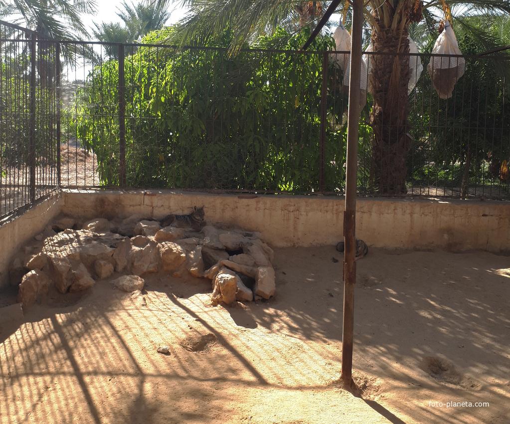 Зоопарк | Таузар (Тунис)