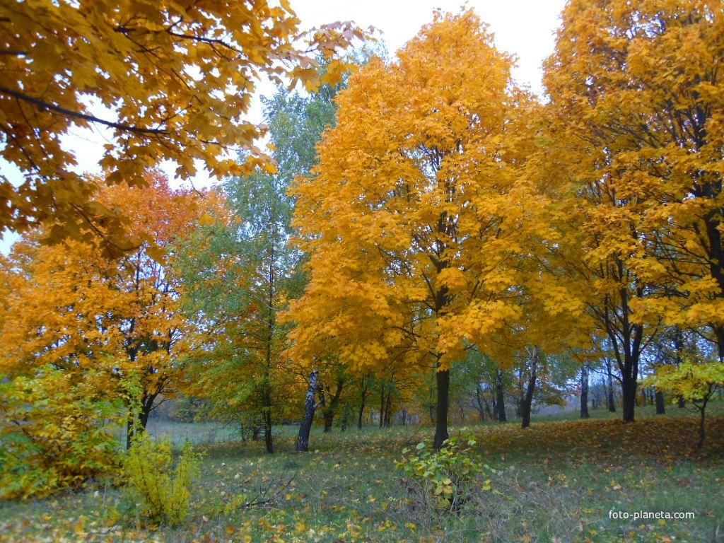 Парк в Грушківці.