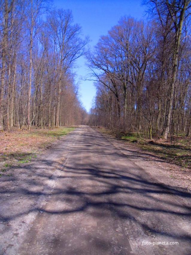 Лісова дорога.